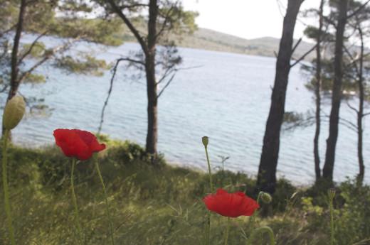 telascica_flowers2